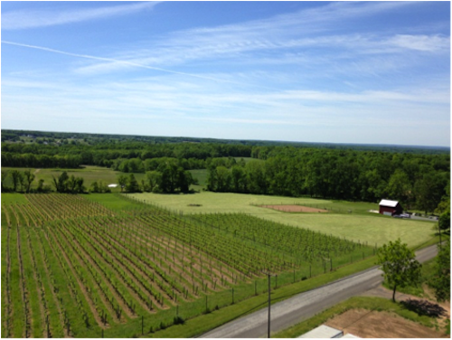 OTHER_Aerial_of_Vineyard-500x376